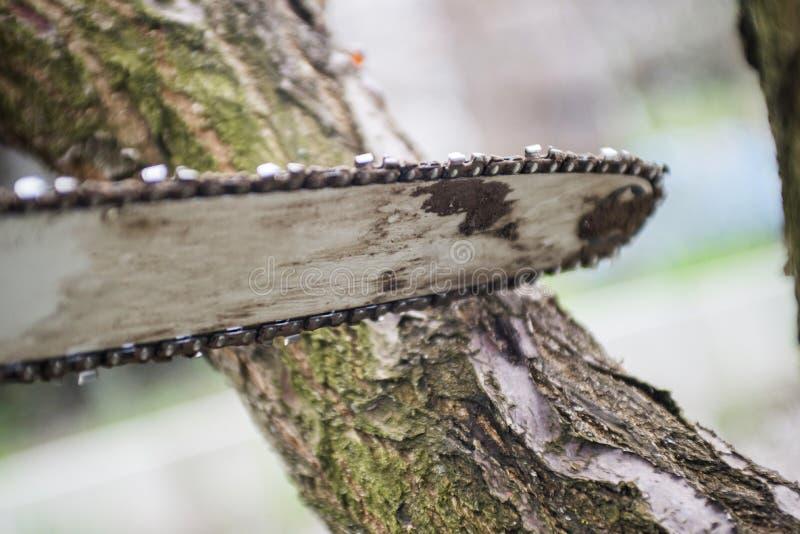 Fermez-vous vers le haut en jour ensoleill? La lame de tron?onneuse coupant le rondin du bois Tron?onneuse pour couper le bois de images stock