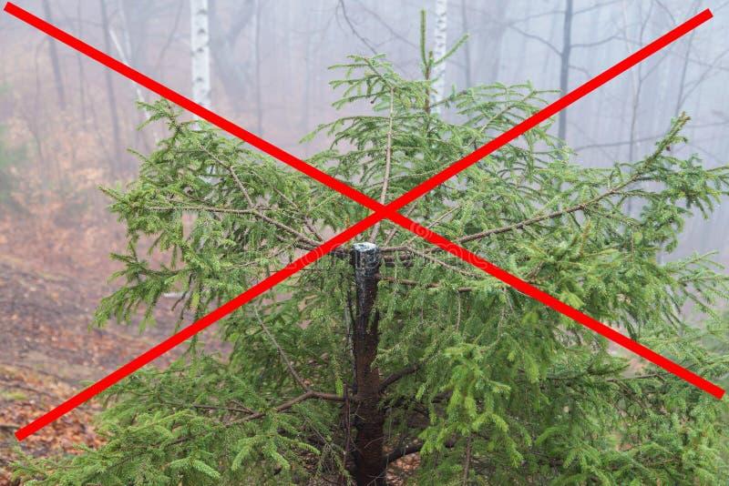Fermi il disboscamento! fotografia stock libera da diritti