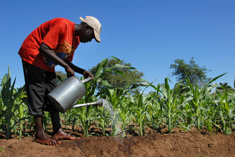 Fermier africain photos stock