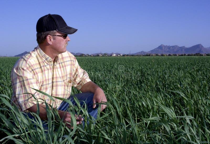 Fermier dans le domaine de blé photos stock