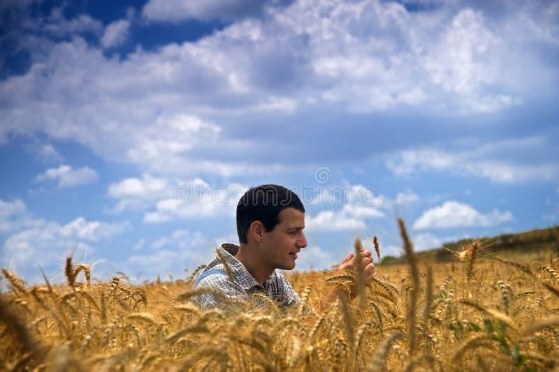 Fermier dans un domaine de blé images libres de droits