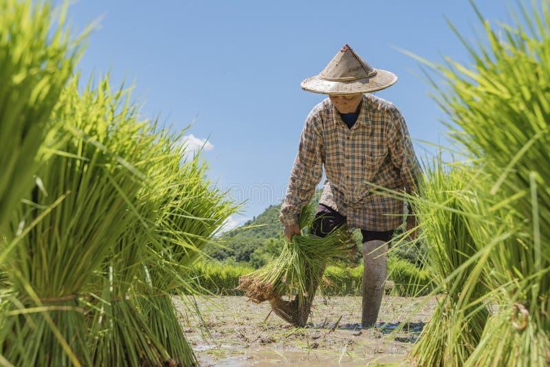 fermiers photo libre de droits