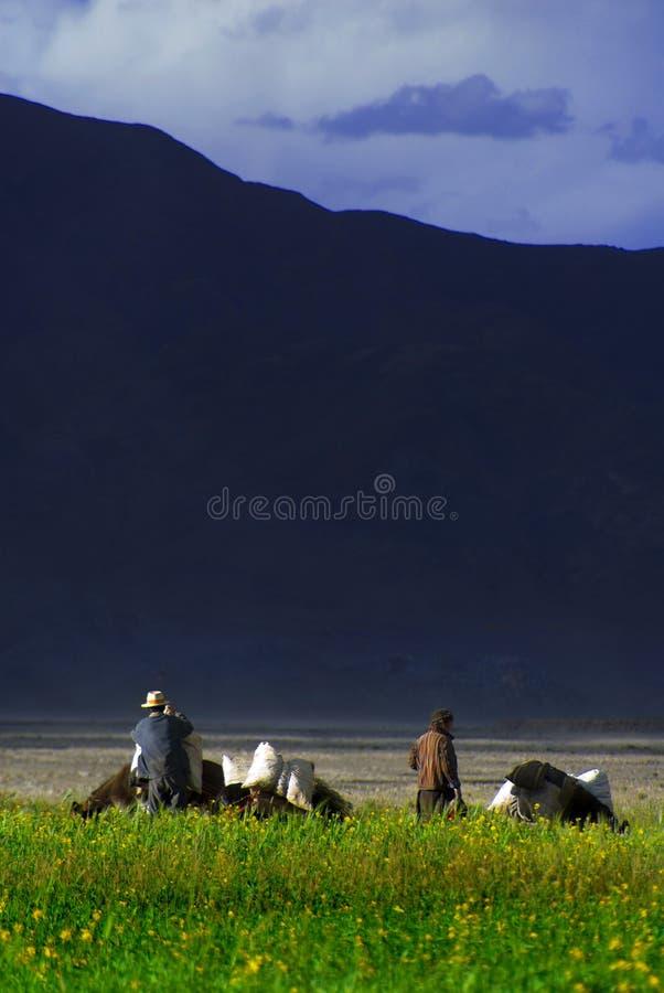 Fermiers tibétains dans le domaine photos stock