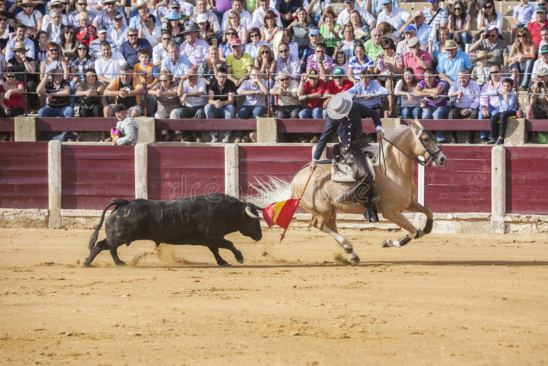 Fermin Bohorquez, bullfighter on horseback spanish, Ubeda, Jaen, Spain. Ubeda, SPAIN - October 2, 2010: Fermin Bohorquez, bullfighter on horseback spanish, in stock image