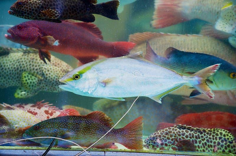 Fermo fresco del pesce vivo del giorno dietro il vetro bagnato della stalla al mercato dei frutti di mare in Hong Kong, Cina immagine stock