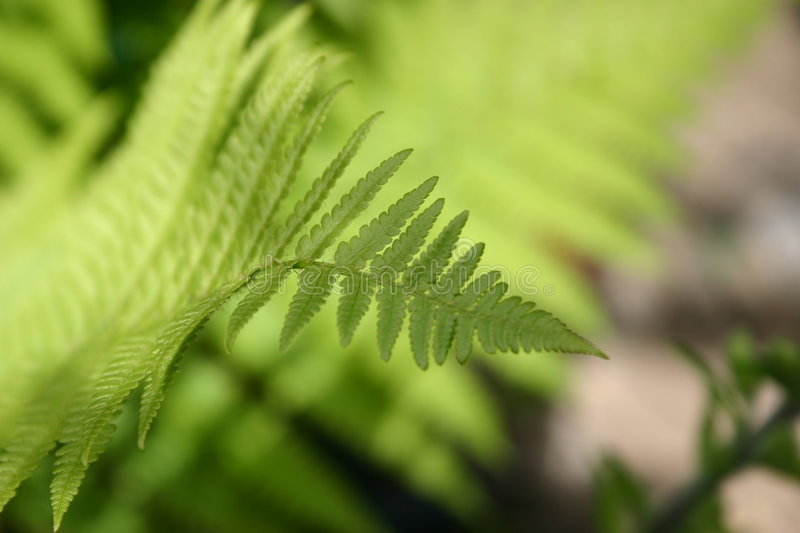 Download Fern Stock Photos - Image: 1066563
