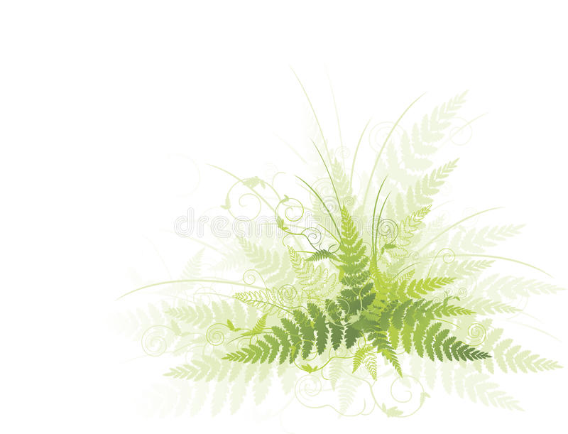 Fern. Illustration of green fern against white background stock illustration