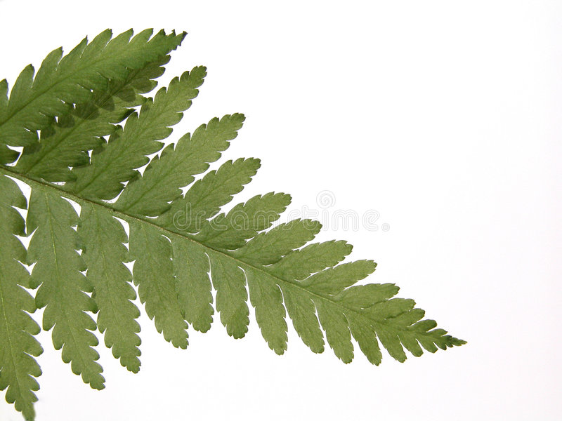 Download Fern stock photo. Image of wilderness, flora, green, meadow - 160612