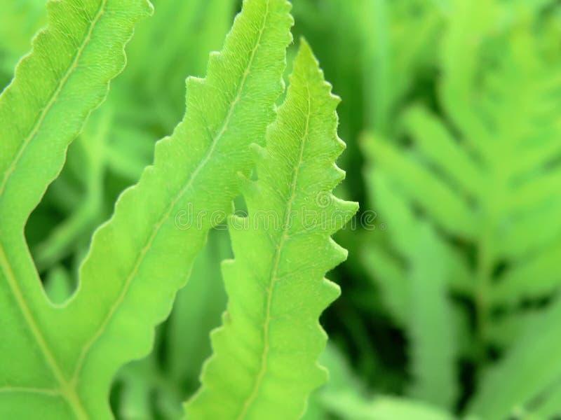 fern royaltyfria foton