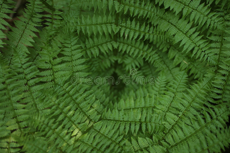 Fern. Tropical fern photographed from above stock photos