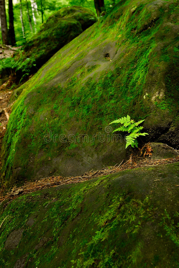 Download Fern stock image. Image of plant, branch, environmental - 2725655