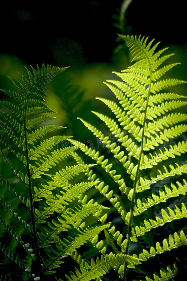 Download Fern stock image. Image of natural, mist, forest, nature - 3728739