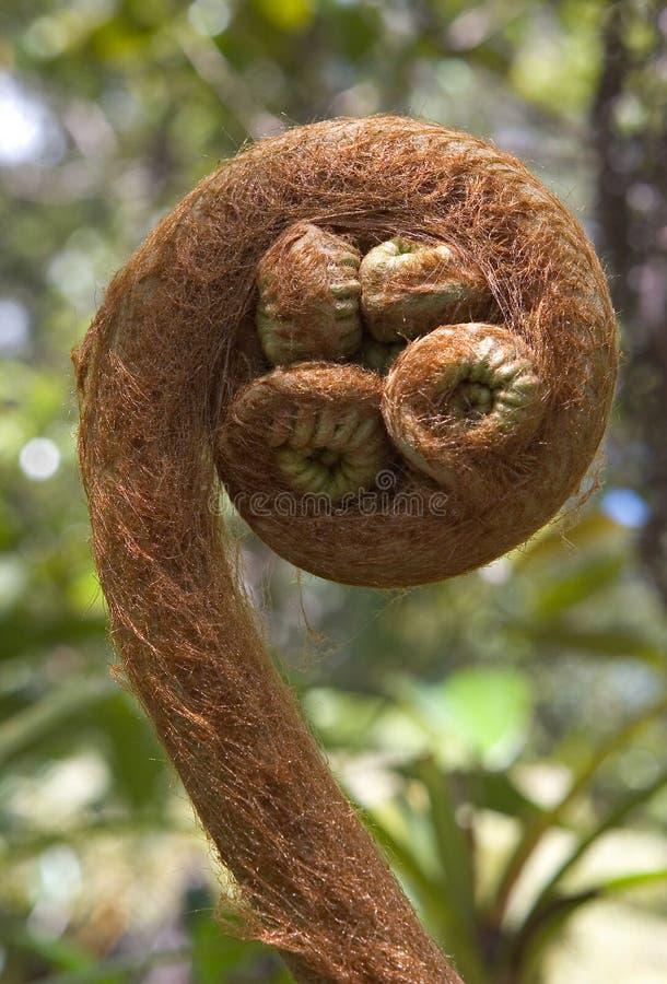 Download Fern foto de stock. Imagem de ferns, onda, floresta, havaí - 64990