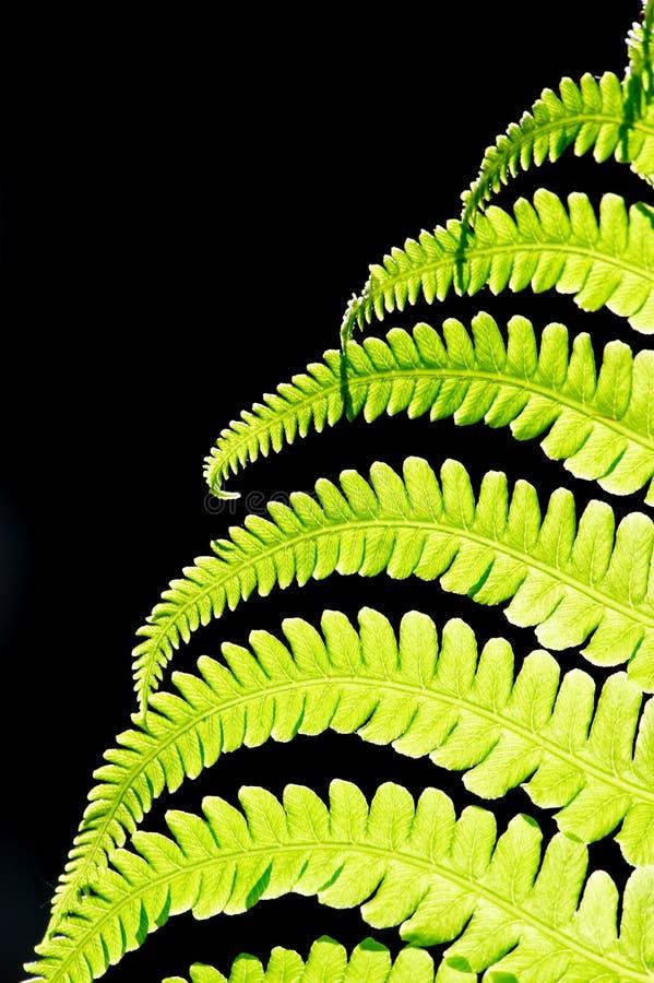 fern, fotografia stock