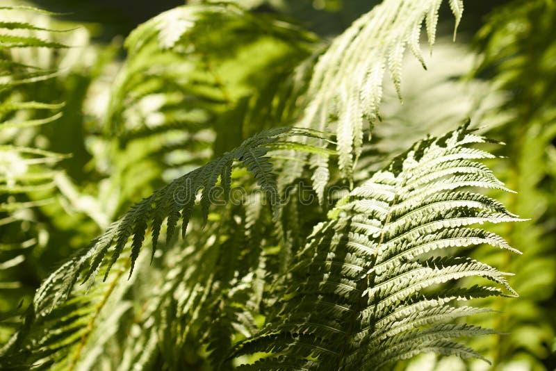 fern fotografia stock