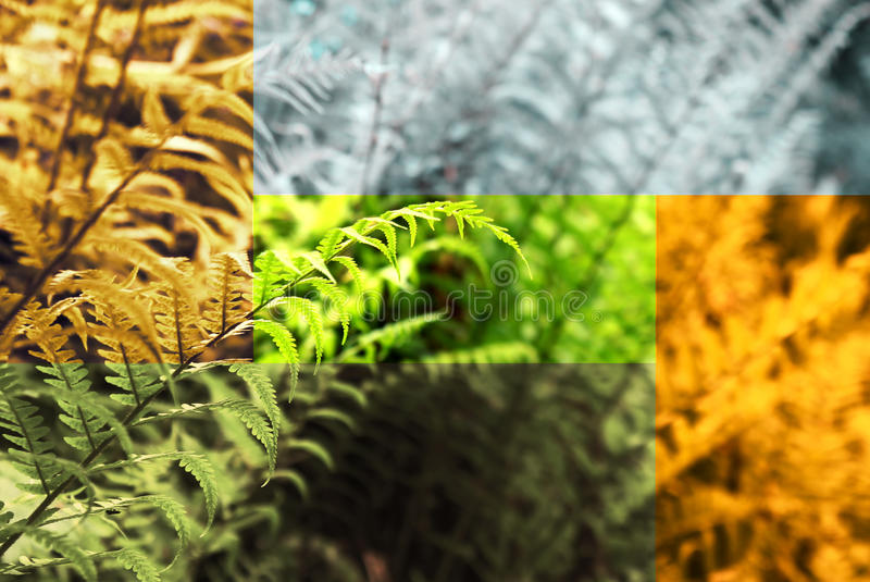 Fern Abstract Collage stock photos