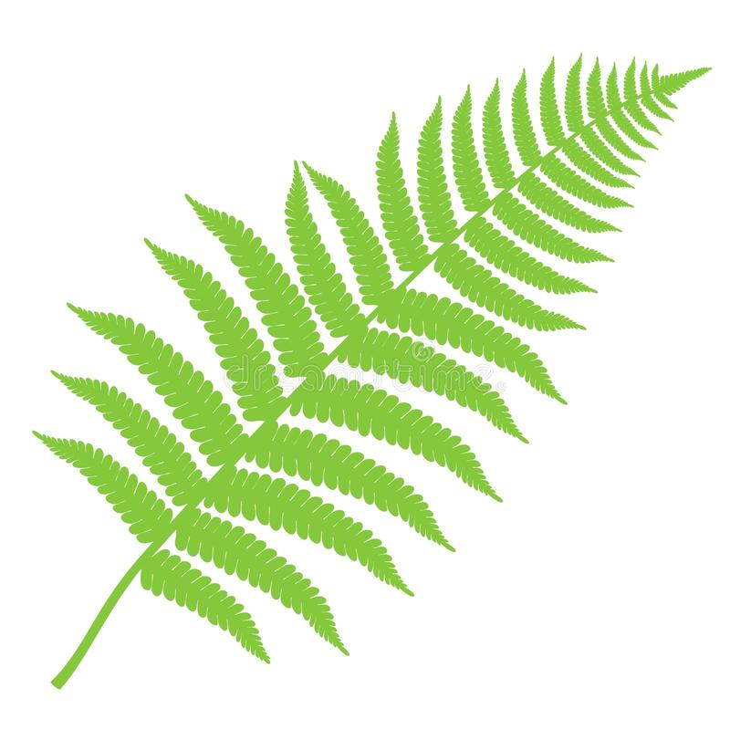 Fern. Abstract. Vector Illustration. illustration EPS royalty free illustration