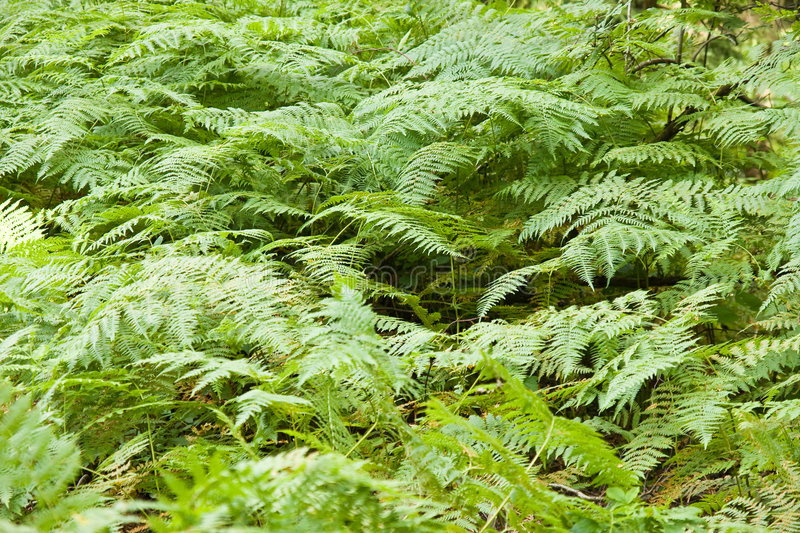 Download Fern background stock photo. Image of greenhouse, leaf - 5990008