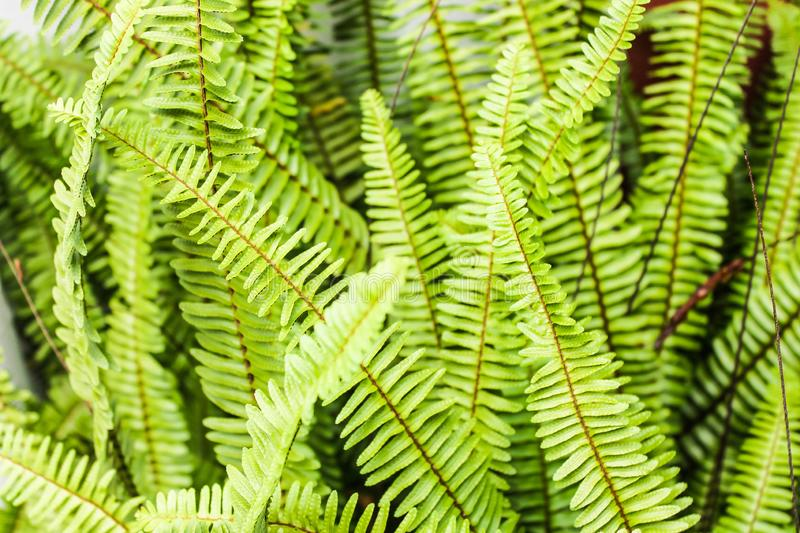 Fern Background Plant Green Detail natürlich stockfoto