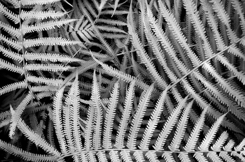 Fern Background Texture royalty free stock photo