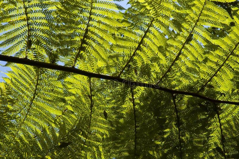 fern backlight zdjęcie royalty free
