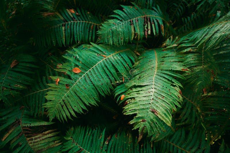 Fern big leaves stock image