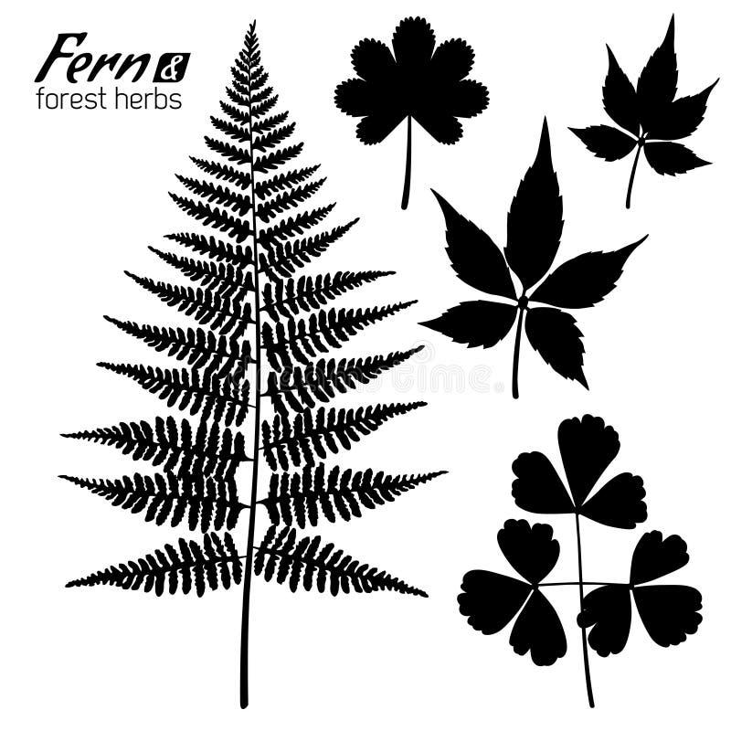 Fern Branch, hoja de Oxalis, uva salvaje se va libre illustration