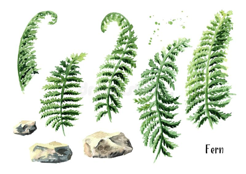 Fern branch and stone set. Watercolor hand drawn illustration, isolated on white background. vector illustration