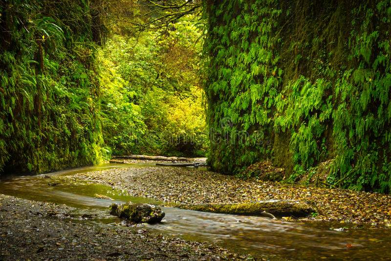 Fern Canyon California. Fern Canyon Prairie Creek Redwoods State Park Humboldt County California stock images
