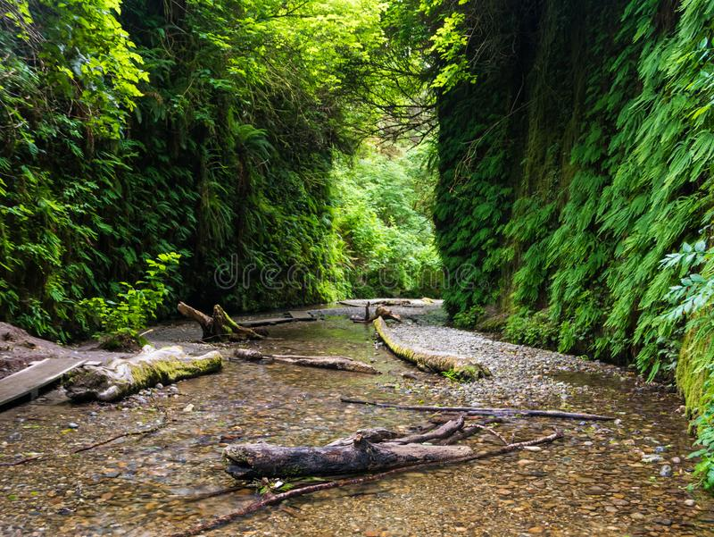 Fern Canyon in Californische sequoia Nationaal Park royalty-vrije stock foto