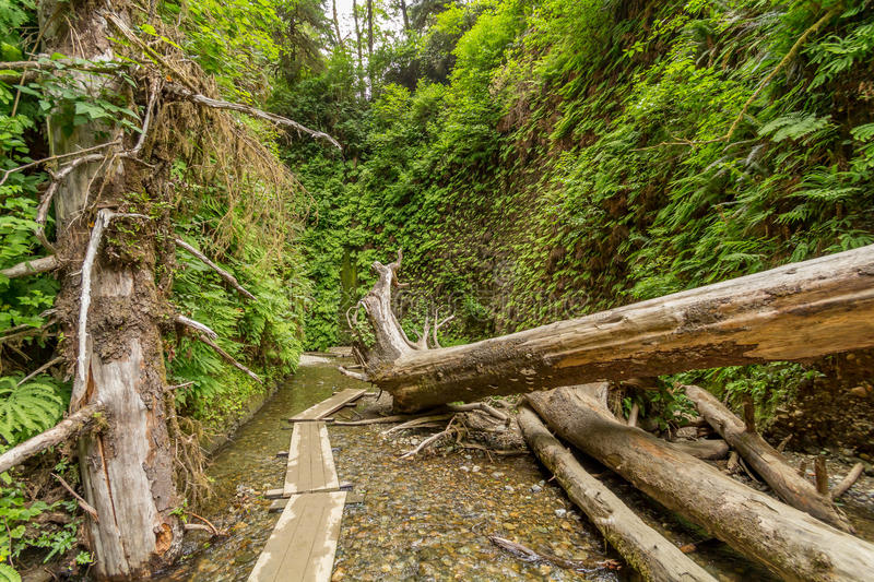 Fern Canyon stock photo