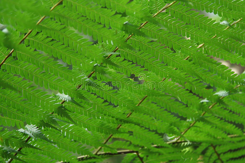 Download Fern Ceiling stock photo. Image of undergrowth, texture - 11278678