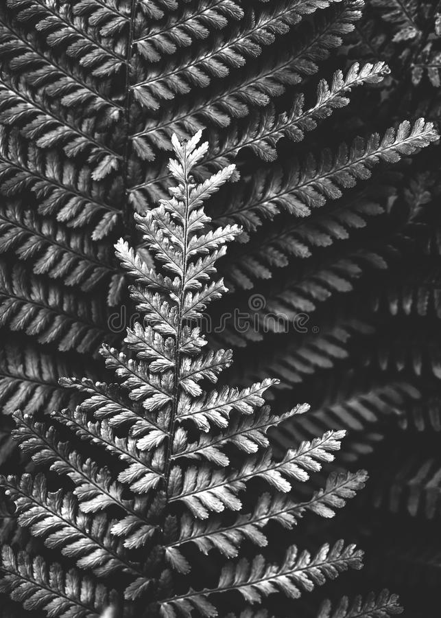 Fern close up monochrome stock image