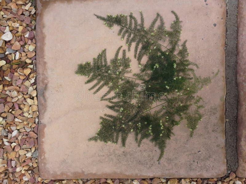 Fern Covered in Kleine Witte Bloemen stock afbeeldingen