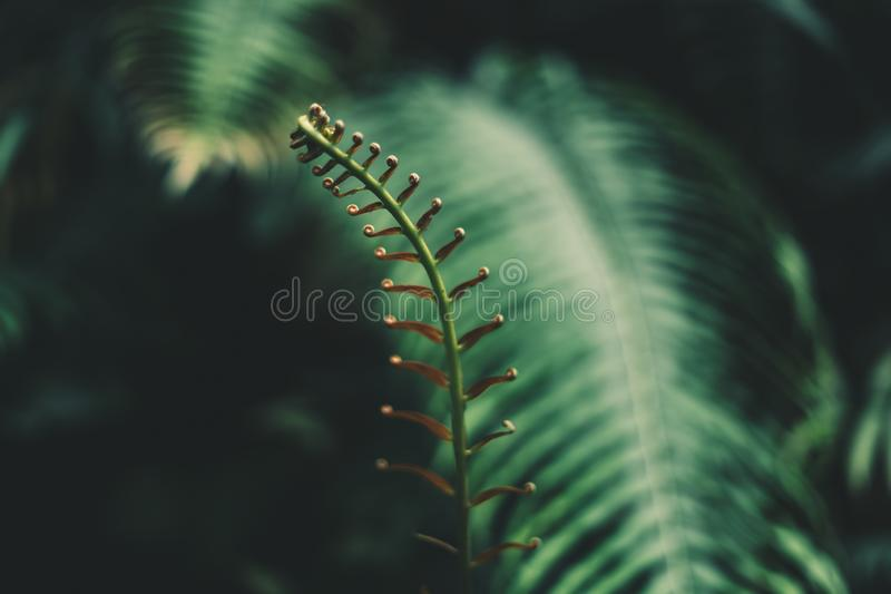 Sky Blue and clouds spring LeavesFern foliage Dark green and cold detail leaf royalty free stock image
