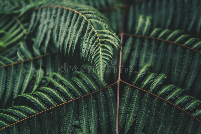 Sky Blue and clouds spring LeavesFern foliage Dark green and cold detail leaf royalty free stock photography