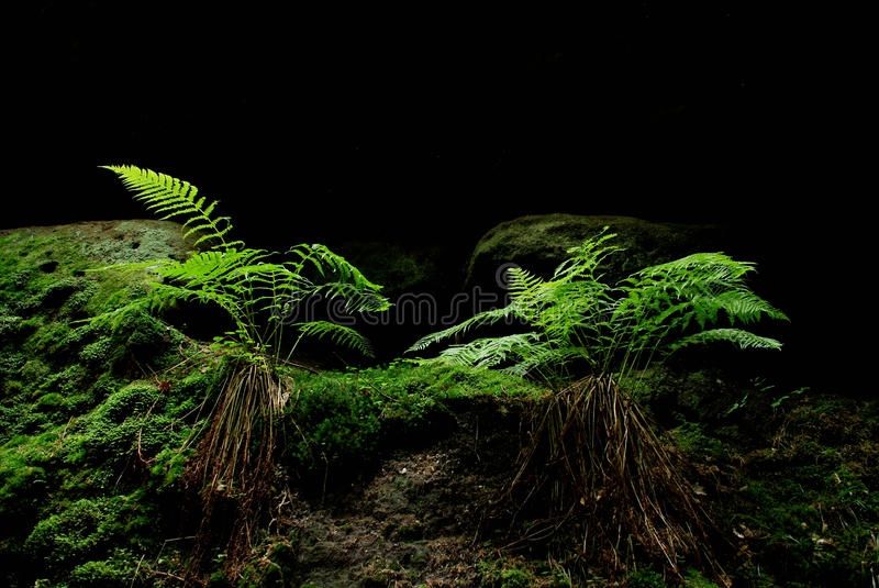 A fern in a forest stock images