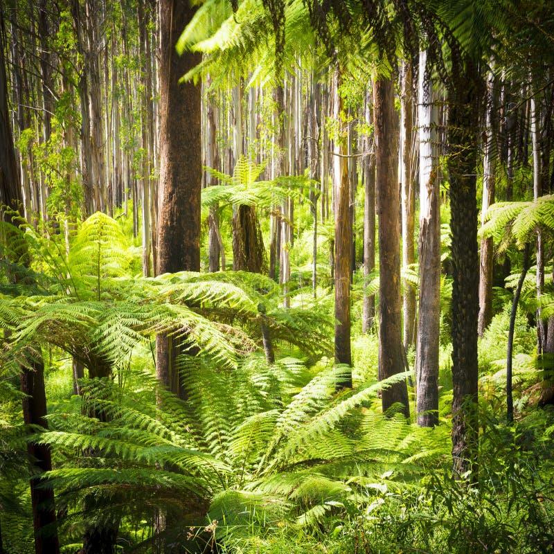 Fern Forest imagenes de archivo