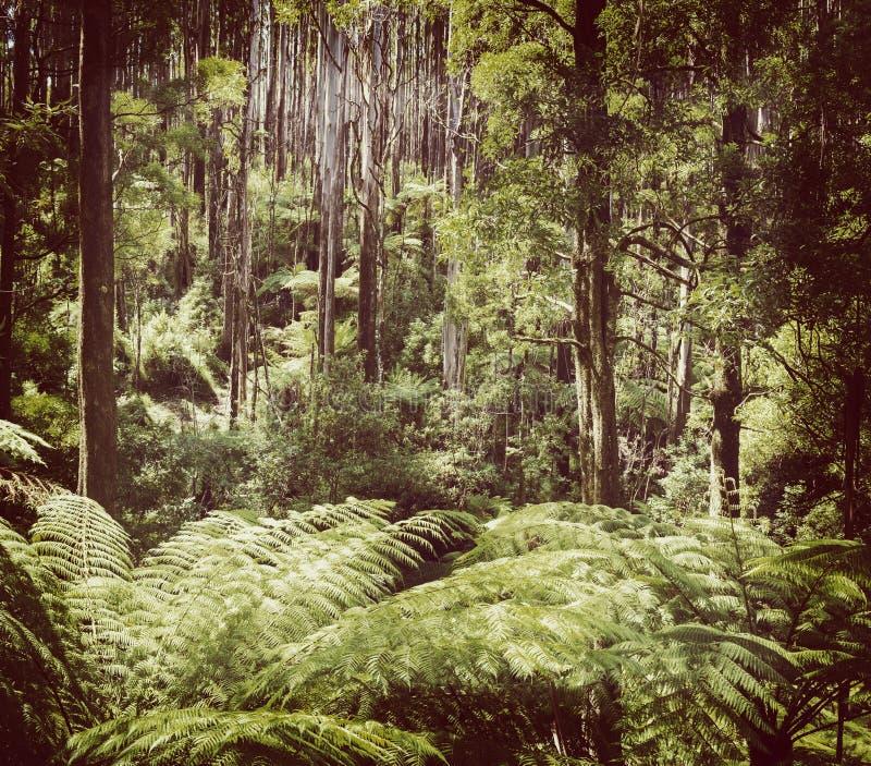 Fern Forest Filtered foto de archivo libre de regalías