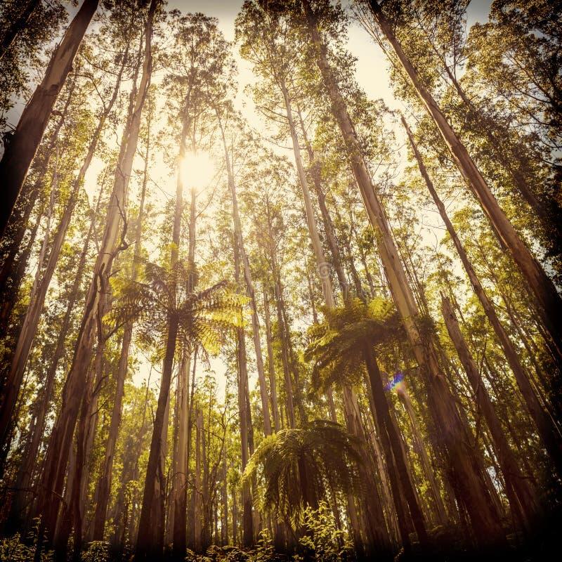 Fern Forest Filtered fotografía de archivo libre de regalías
