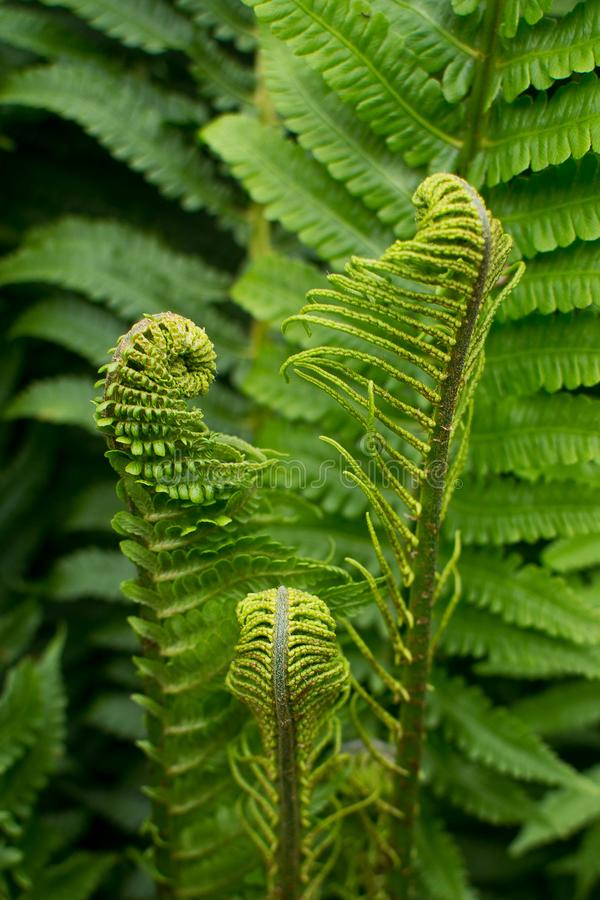 Fern in the forest. Ivan Kupala`s night stock photo