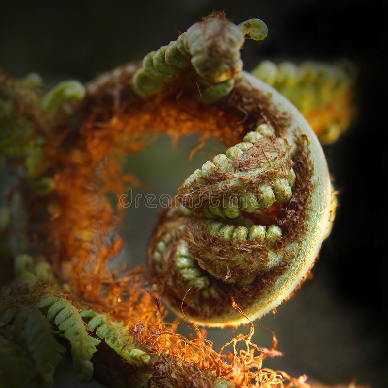 Download Fern Frond Royalty Free Stock Photography - Image: 169897