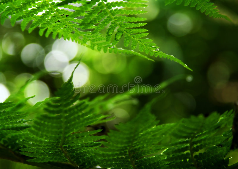 Fern Frond Frame Stock Photography