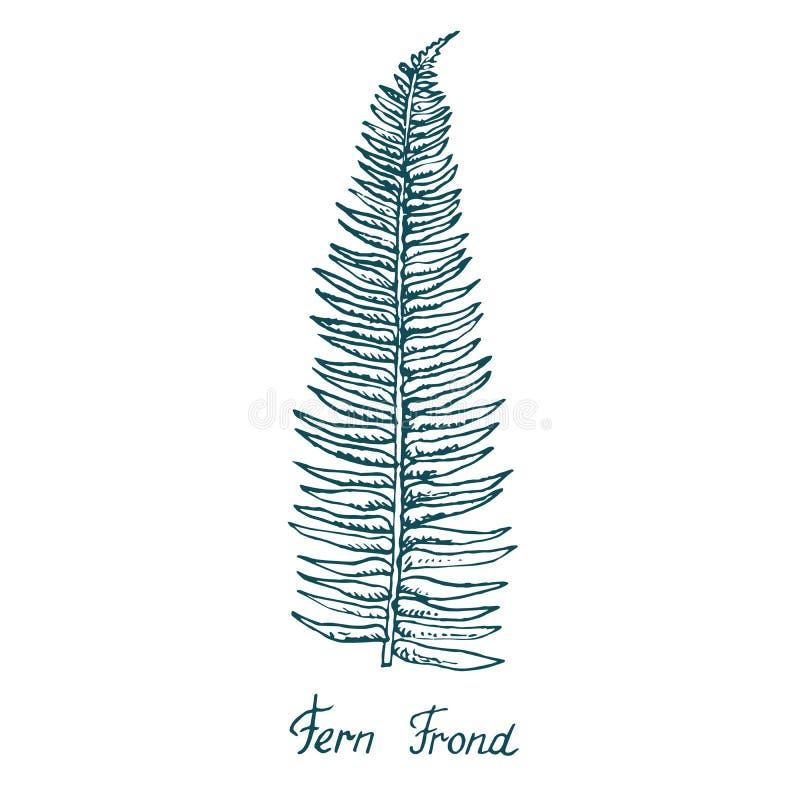 Fern Frond Leaf, garabato exhausto de la mano, bosquejo libre illustration