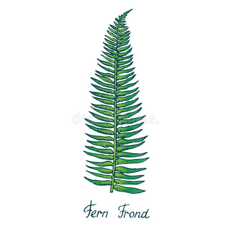 Fern Frond Leaf, garabato exhausto de la mano, bosquejo stock de ilustración