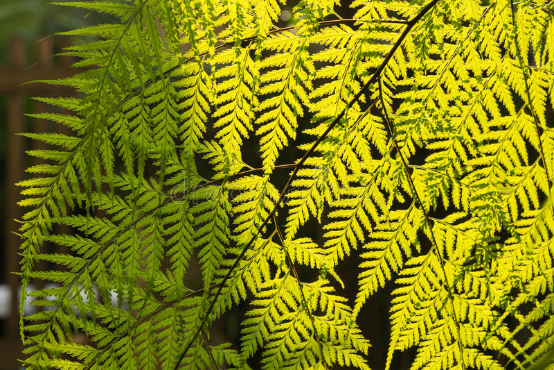 Fern in the garden royalty free stock photos