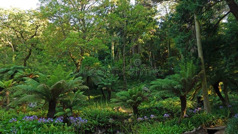 Fern Garden in Romantic Pena National Palace op de heuvel in Sintra, Portugal stock foto's