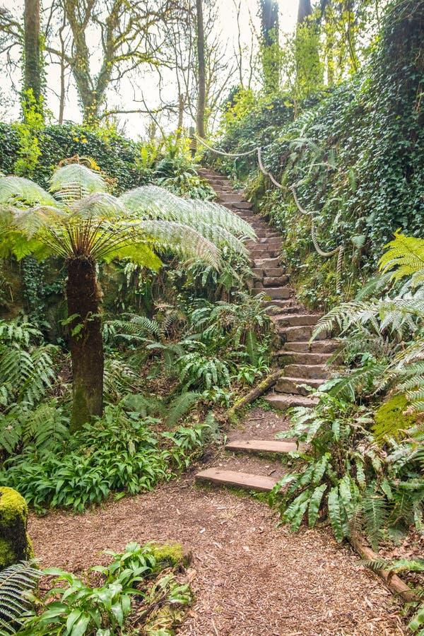 Fern Garden Steps fotografía de archivo