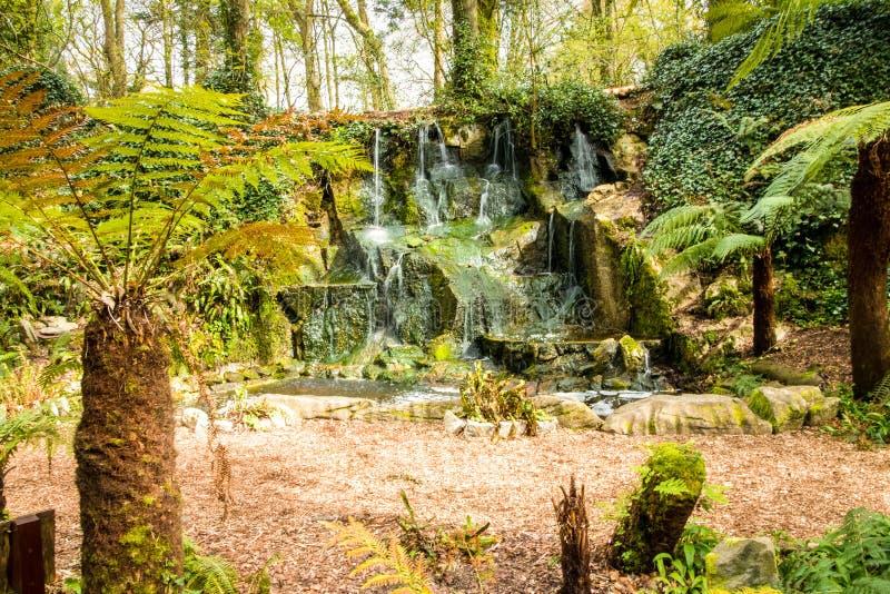 Fern Garden Waterfall imágenes de archivo libres de regalías
