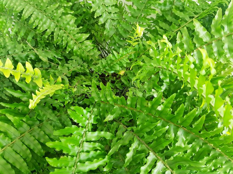 Fern Green Leafs Abstract Background royalty-vrije stock fotografie